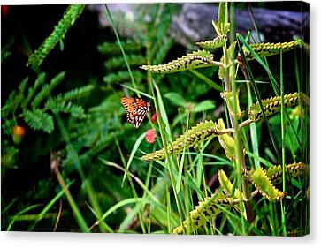 Hilo Butterfly Canvas Print