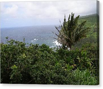 Hilo Coast Hawaii Canvas Print by Don Phillips