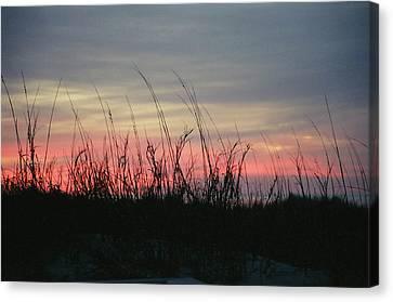 Hilton Head Grass At Sunrise Canvas Print