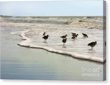 Beach Theme Decorating Canvas Print - Plundering Plover Series 6 by Angela Rath