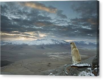Himalayan Dog Canvas Print by Sebastian Wahlhuetter
