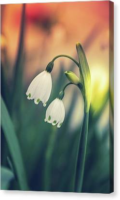 Hint Of Spring Canvas Print by Terry Davis