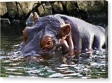 Hippo 3779_2 Canvas Print