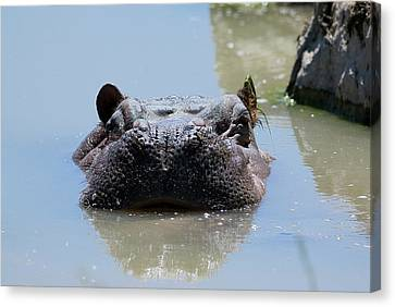 Canvas Print featuring the photograph Hippo by JT Lewis