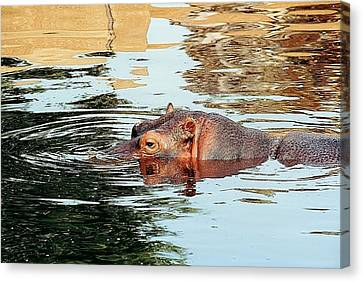 Hippo Scope Canvas Print by Jan Amiss Photography
