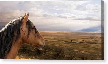 His Domain Canvas Print by Ron  McGinnis