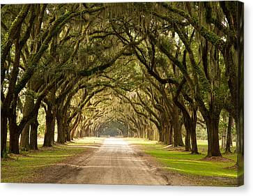 Historic Live Oak Trees Canvas Print