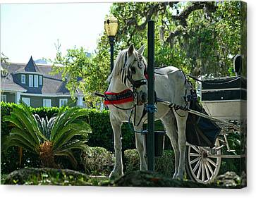 Hitched And Ready Canvas Print by Bruce Gourley