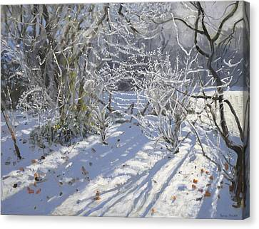 Hoar Frost Canvas Print by Andrew Macara