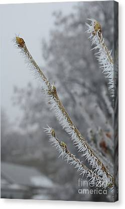 Hoarfrost On Branches And Buds Canvas Print