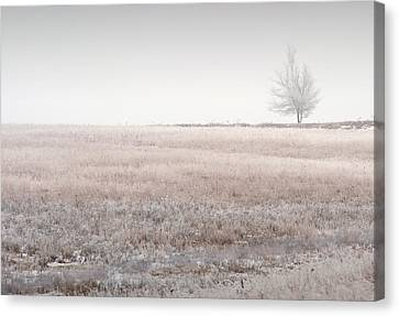 Hoarfrost Pasture Canvas Print by Fred Lassmann