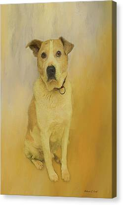 Canvas Print featuring the photograph Hobbit The Harrier Hound by Bellesouth Studio