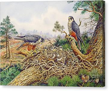 Hobbys At Their Nest Canvas Print by Carl Donner