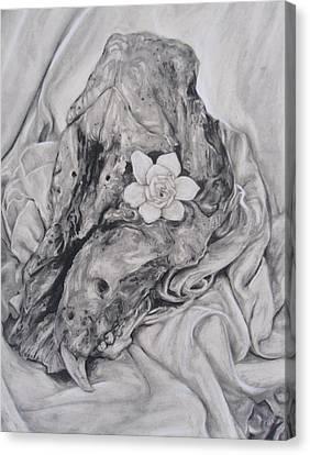 Hog Skull And Gardenia Canvas Print