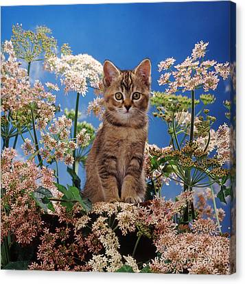 Hogging All The Hogweed Canvas Print