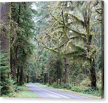 Hoh Rain Forest Road Canvas Print