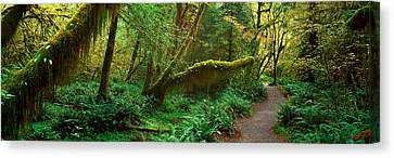 Hoh Rainforest, Olympic National Park Canvas Print by Panoramic Images
