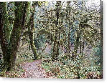 Hoh Rainforest Canvas Print
