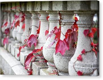 Holding On  Canvas Print by A New Focus Photography
