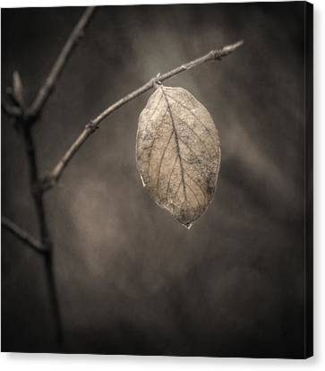 Sepia Tone Canvas Print - Holding On by Scott Norris