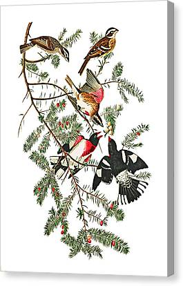 Canvas Print featuring the photograph Holiday Birds by Munir Alawi