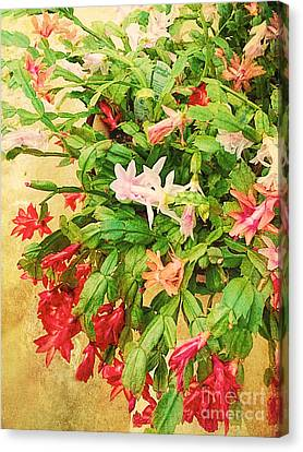 Holiday Christmas Cactus Canvas Print by Vizual Studio