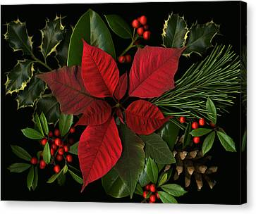 Holiday Greenery Canvas Print by Deborah J Humphries