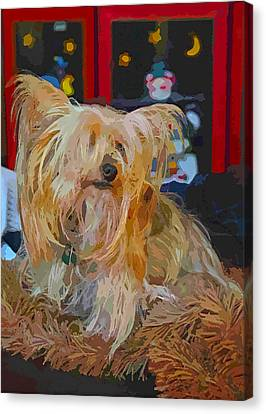 Holiday Yorkie Canvas Print by John Dauer