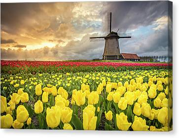 Nederland Canvas Print - Holland Windmill by Stefano Termanini