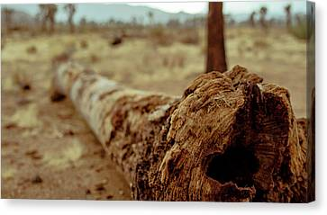 Hollow Lines Canvas Print