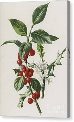 Red Leaf Canvas Print - Holly by Frederick Edward Hulme