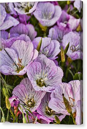 Holly Hocks - 1 Canvas Print by Greg Jackson