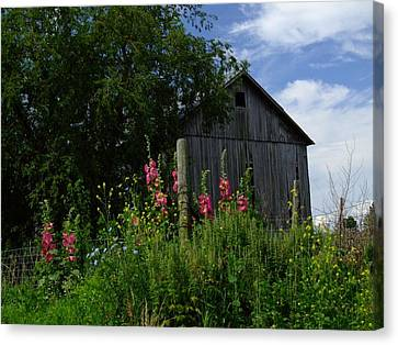 Hollyhock Barn Canvas Print by Michael L Kimble