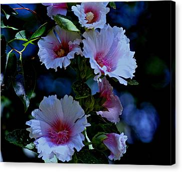 Hollyhock Blooms Canvas Print by Martin Morehead