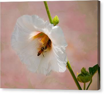 Hollyhocks For Dinner Canvas Print by Carolyn Dalessandro