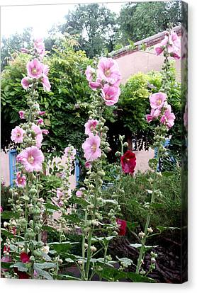 Hollyhocks Taos New Mexico Canvas Print by Wayne Potrafka