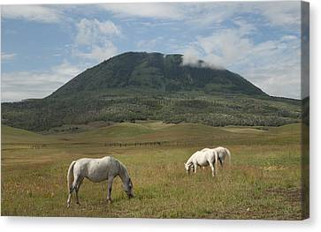 Canvas Print featuring the photograph Home On The Range by Daniel Hebard