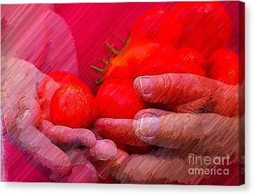 Homegrown Red Ripe Tomatoes Canvas Print by Lewis Lang