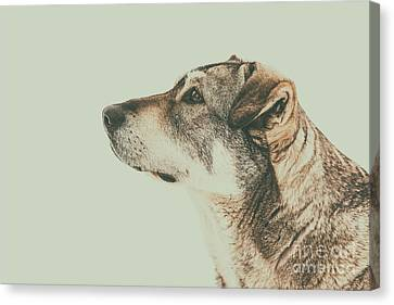 Homeless Dog Looking Up Portrait Canvas Print by Radu Bercan