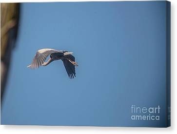 Canvas Print featuring the photograph Homing Home by David Bearden