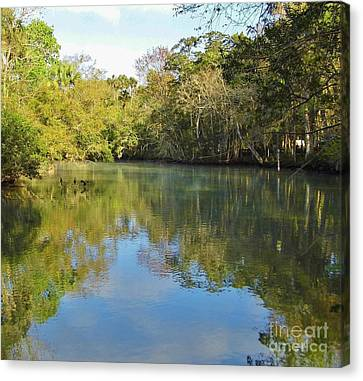 Homosassa River Canvas Print by D Hackett