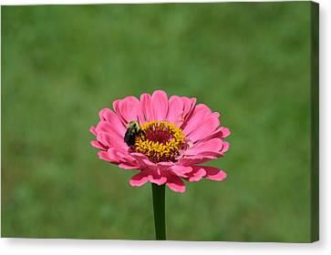 Honey Bee At Work Canvas Print by Linda Geiger