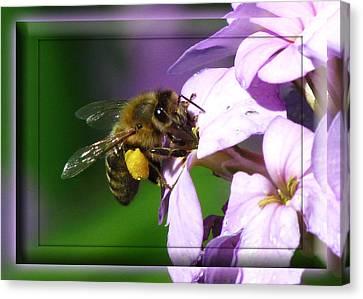 Honey Bee Canvas Print by Deborah Johnson