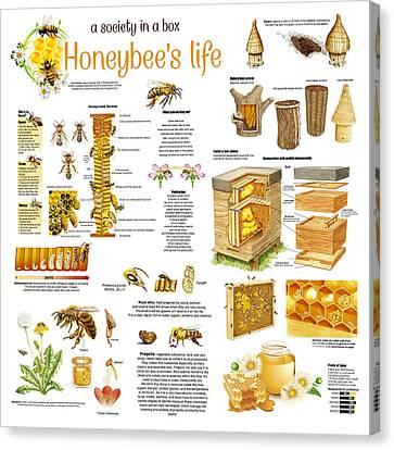 Canvas Print featuring the drawing Honey Bees Infographic by Gina Dsgn