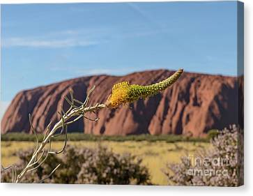 Canvas Print featuring the photograph Honey Grevillea 01 by Werner Padarin