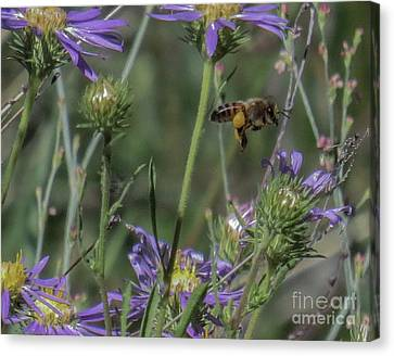 Honeybee 2 Canvas Print