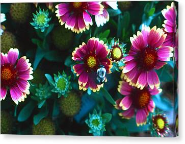 Canvas Print featuring the photograph Honeybee And Flowers by Lori Miller