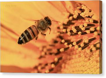 Canvas Print featuring the photograph Honeybee And Sunflower by Chris Berry