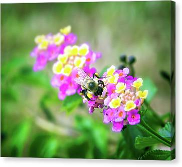 Honeybee Garden Canvas Print
