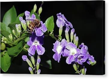 Canvas Print featuring the photograph Honeybee On Golden Dewdrop II by Richard Rizzo